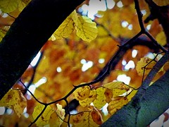 2016-11-21 autumn leaves 2 (april-mo) Tags: autumn automne fall autumnleaves deadleaves feuillesmortes blurred