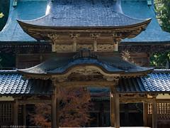 E-M1-160081 (Torunara_Photo) Tags: autumn outdoor temple budda