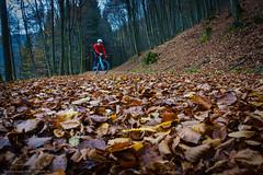 Oh hi there :) (Torsten Frank) Tags: baum buche crossrad deutschland fahrrad giant herbst herbstlaub laub mittelgebirge nordrheinwestfalen pflanze radfahren radsport rothaargebirge selbstportrait tcxadvancedpro1 torsten wittgenstein sasmannshausen sdwittgensteinerbergland bike bicycle cyclocross cycling autumn fall