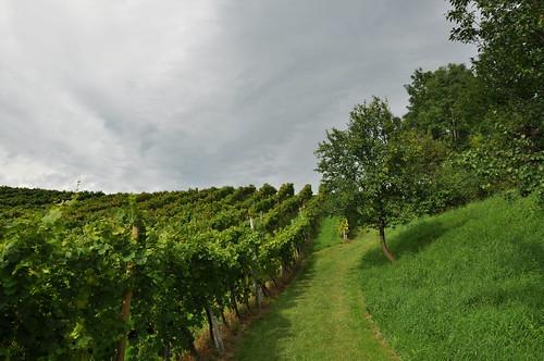 Sonne und Wolken im Weinberg
