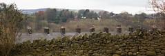 Pas de feu sans chemine! (dominiquita52) Tags: chimneys chemines walls murs lancashire trawden