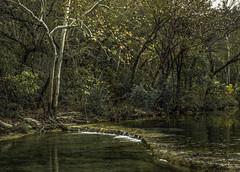 Typical Fall Day (keith_shuley) Tags: fall south texas austin bullcreek olympus