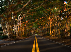 Florida Life: Shelter (Thncher Photography) Tags: sony a7r2 sonya7r2 ilce7rm2 zeissfe1635mmf4zaoss fx fullframe scenic landscape nature outdoors light shadows colors sunrays banyantrees treecanopy palmcity stuart martincounty oldstlucieroad florida southeastflorida