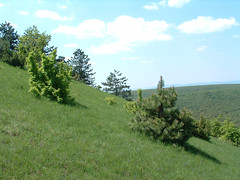 A Vas-hegy oldalban (ossian71) Tags: cserht magyarorszg hungary tjkp landscape termszet nature hegy mountain