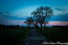 Its not all doom and gloom if you can see the beauty in the dark... (ScopiePhotography) Tags: tree night country road sunset blue purple pink pretty silhouette tone feelings doom gloom beauty beautiful