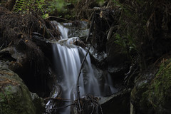 Long Exposure Waterfall 1 (dcnelson1898) Tags: muirwoodsnationalmonument marincounty california northerncalifornia forrest outdoors trees redwoods oak douglasfir canyon nationalpark nationalparkservice nps creek water