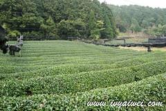 SAM_9087 (ivyaiwei86) Tags: travel japan uji kyoto autumn matcha