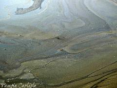 Blue-green Algae (tinlight7) Tags: bluegreenalgae pondscum lake wasit sharjah uae taxonomy:kingdom=bacteria bacteria taxonomy:phylum=cyanobacteria cyanobacteria taxonomy:common=bluegreenalgae