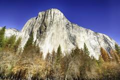 El Capitan (jgokoepke) Tags: elcapitan yosemitevalley yosemitenationalpark california usa hdr tree wood bluesky winter