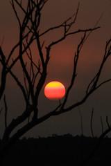 Smokey Sunset (robertdownie) Tags: stratified abstract color colourful dark layers light pattern silhouette sky smoke smokey star strata sun sunset tree new south wales nsw australia laguna wollombi