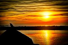 Beautiful sunset (Sander Pot) Tags: sunset harbour harbor yellow red bird black hdr nikon d7000 scheveningen den haag hague nederland netherlands sun water sea cloudporn