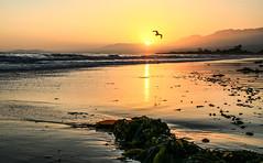 Carpinteria, Ca (pevans941) Tags: ocean california c