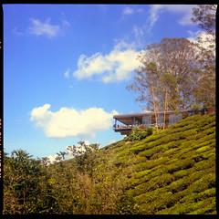 Boh Tea Centre. . . (Hafiz_Markzzaki) Tags: trees tlr mediumformat landscape bluesky cameronhighlands bohteacentre mamiyac330s kodakektacolorpro160 negativescanned mamiyasekor80mmf28 canoncanoscan8800f bohteaplantations