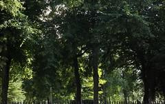 Green Light / Grnt Ljus (brandsvig) Tags: old summer skne sweden cemetary july sunny m42 mf sverige malm gttingen sommar kyrkogrd storanygatan canon500d isco soligt 2013 westromat berolinawestromat gamlabegravningsplatden