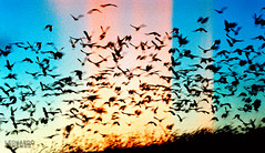 Pajaros (Leonardo j fotografa) Tags: parque naturaleza atardecer costarica arte vida pajaros fotografa guanacaste humedal