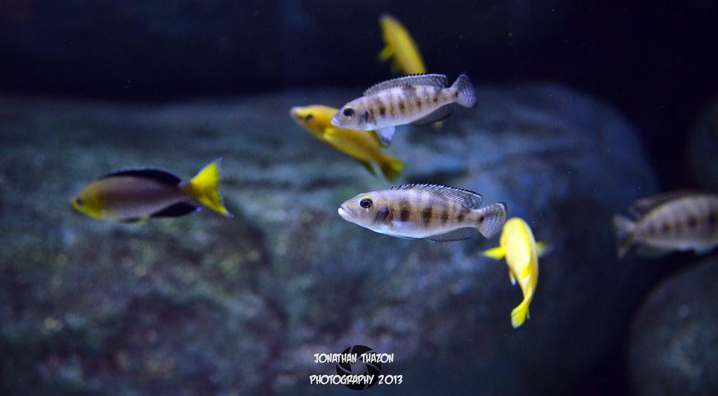 snake at baltimore aquarium by 28 images national