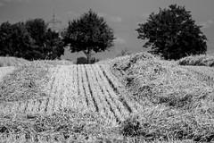 Hstet - Abgeerntet (AxelN) Tags: bw field deutschland bokeh mark harvest feld sw hst ernte badenwrttemberg stoppeln jettingen bokehlicious