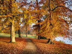 Autumn in Potsdam (TresMariasinPie) Tags: city autumn trees leaves germany deutschland focus photos pics snapshot picture ciudad pic alemania fotografia capture landschaft potsdam brandenburg imagen strasenszene canonpowershotg10 tresmariasinpie