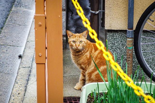 Today's Cat@2013-10-20