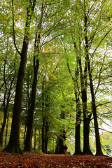 IMG_3301 (Josette Veltman) Tags: herfst veluwe kasteel gelderland rosendael rozendaal