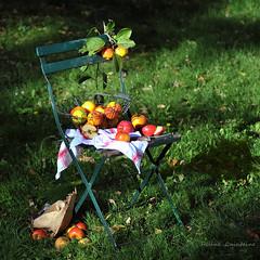 Quelques pommes.... (Hélène Quintaine) Tags: composition jaune automne rouge jardin vert chapeau matisse chaise bois fer octobre pomme herbe feuille paille quartier création couteau torchon pépin àlamanièrede