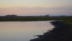 Seelim Creek 5 (dustaway) Tags: pelicans water animals reflections countryside dusk australia lagoon nsw wetlands smoky backwater lastlight northernrivers coraki richmondvalley vision:sunset=0814 vision:mountain=0669 vision:outdoor=0971 vision:ocean=0814 vision:sky=0973 vision:clouds=0823 seelimcreek seelemscreek seelimscreek