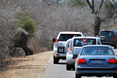 Kruger National Park - Traffic (OurPhotoWork) Tags: southafrica nationalpark wildlife krugernationalpark kruger ourphotowork sa2013