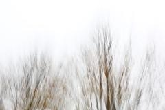 branches pattern #1 (ito_hajime) Tags: park autumn blur tree leaves canon eos tokyo leaf branch bokeh 5d   mk3  mark3  markiii   showakinen  autumnaltints ef2470mm f28lii 5dmarkiii