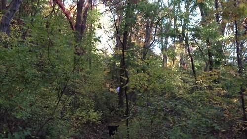 Turkey Mountain, Autumn- video clip