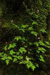 The God of Small Things (Sairam Sundaresan) Tags: flowers color colour green colors closeup oregon canon river portland glow colours cloudy fineart columbia full foliage 5d gorge canon5d fullframe columbiarivergorge sairam sundaresan canon5dmarkiii 5dmarkiii sairamsundaresan