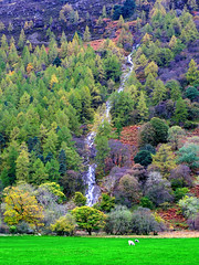 Buttermere Waterfall 2 (tubblesnap) Tags: lake tree waterfall heather district falls cumbria fir bracken tumbling buttermere vision:mountain=0618 vision:outdoor=0926 vision:plant=0907