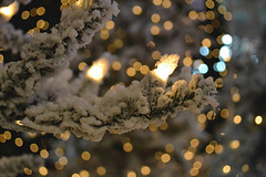 twigs (evokativity) Tags: reflections christmaslights snowybranches