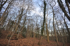 Leaves have fallen (petefreeman75) Tags: uk england walking woods fields footpath muddy allrightsreserved pellison petefreeman