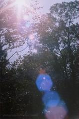 sun (Heather Floccari) Tags: pink blue light sun film colors 35mm lomo lomography pretty purple lightleak