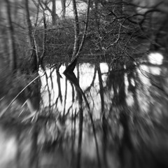 Nether Wood 73 - Untitled (Adam Clutterbuck) Tags: wood uk greatbritain england blackandwhite bw tree monochrome lensbaby square landscape mono blackwhite unitedkingdom britain somerset bn elements gb bandw sq mendips charterhouse undergrowth nether greengage netherwood adamclutterbuck sqbw bwsq showinrecentset
