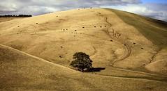 Loneliness (manezob) Tags: autumn australia victoria vic gippsland samuelanderson georgegipps paweledmuntstrzelecki