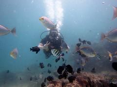 IMG_9107 (milewski) Tags: ocean fish me water underwater salt bubbles scuba diving rob tropical scubadiving diver saltwater breathing tropicalfish underwaterphotography airbubbles scubadiver oceanphotography