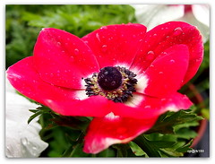 Beauty of Flowers and Nature. (cpark188) Tags: plants flower picasa olympusepl3
