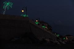 Le luci della notte (Federica, ingFI) Tags: notte lungomare palme illuminazione lampioni luminarie