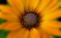 Macro Focal Soften ( Montse;-))) Tags: macro flor focal soften