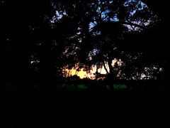 A dark night among the trees (Esteban 507) Tags: night nightphoto nightphotography penumbra gloom atardecer sunset tree forest celva photograpy photographer fotografia fotografo fotografianocturna