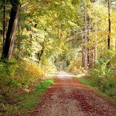 autumn path #1 (Stiller Beobachter) Tags: autumn sunshine path forest trees