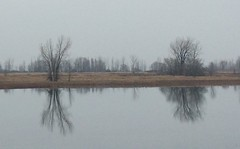 Grey day on the St. Lawrence (Joann Egar) Tags: stlawrenceriver fleuvesaintlaurent quebec canada