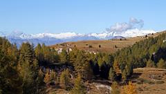 Adamello Presanella Alps from Alpe Pozza (Pasubio) (ab.130722jvkz) Tags: italy trentino alps easternalps rhaetianalps adamellopresanellaalps venetianprealps paubiogroup mountains