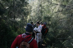 Hiking Down (David_Brereton) Tags: canon canoneos canoneos400d pine pinetrees hiking lighting red trees indonesia mountbromo