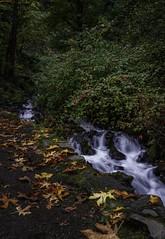 Fall Photoshoot-12 (Jorge97301@gmail.com) Tags: autumn fall waterfalls oregon pnw beautiful stunning farm silver falls state parks forest creek stream water pool lake rocks dog portland silverton salem
