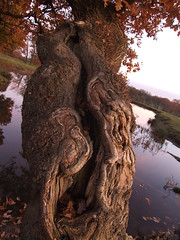 Stump (Nicole Longmore) Tags: tree deformed natural autumn