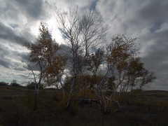 . 21  2006    (   ).   Birch wood. October 21, 2006, near Sekretov station (Oblivsky District of the Rostov region) (Igor Borisovich Abramov) Tags:           2006              russia russianfederation birchwood wood birches mushroomplace october autumn sekretov oblivskiydistrict oblivskiyrayon rostovregion rostovoblast sand sky clouds yellowness yellow delight delights charm fascination rapture ecstasy outdoor outdoors travel journey tour voyage trip