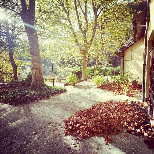 That time of the year, when our garden is covered with leafs 🍁 #autum #fall #leaf🍃 #garden #hotel #hotelgarden #hotellucija #mostnasoci #socavalley #slovenia #igslovenia #igposocje