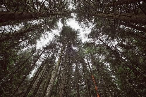 Trees @ Durmitor National Park, Montenegro  #nationalpark #nationalparklife #natgeo #ig_worldclub #insta_montenegro #montenegro #ig_travel #ig_montenegro #nature #silence #mountains #clouds #vsco #rsa_vsco #travel #hiking #fujifilm #fujix #fuji_xseries #f
